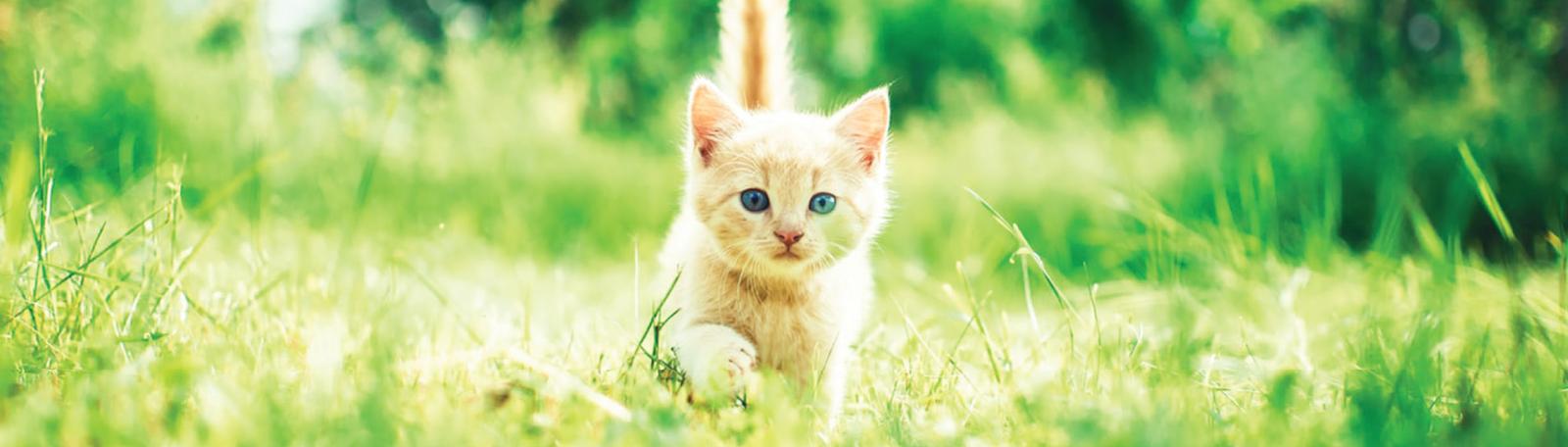 My Home Vet kitten slider
