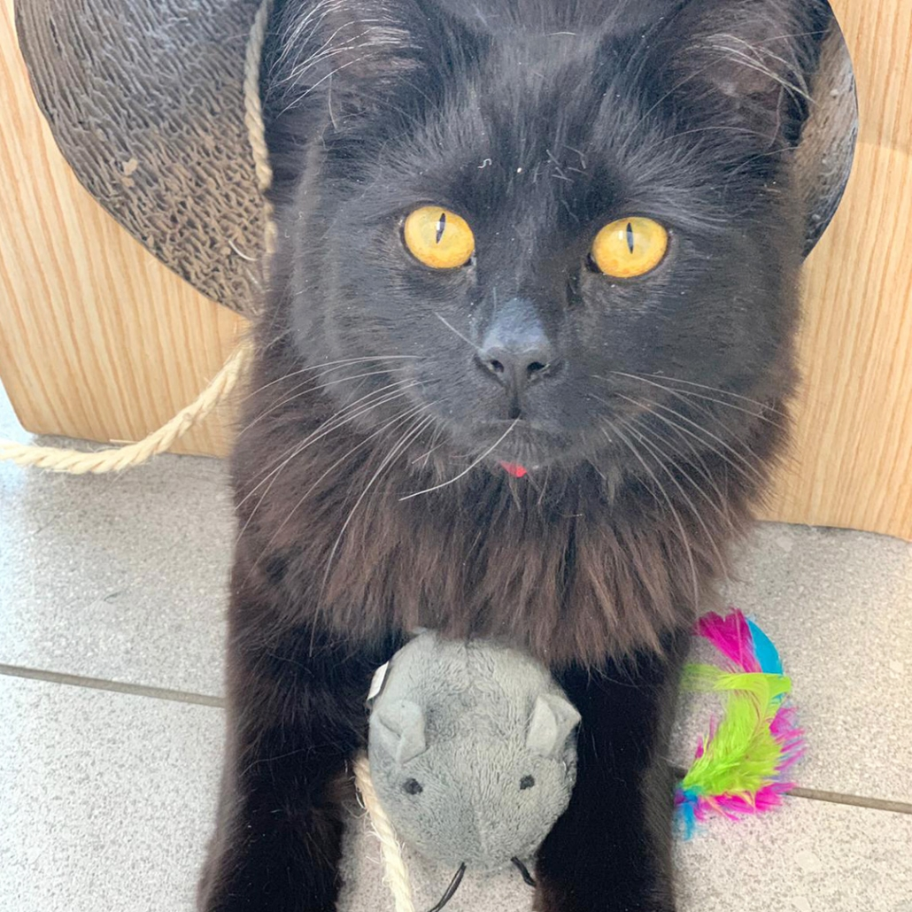 My Home Vet Cat black with mouse