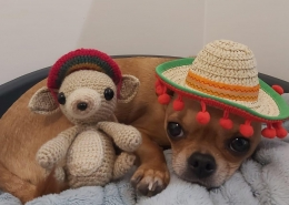 My Home Vet Dog in a hat on a bed